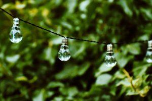 bombillas naturaleza